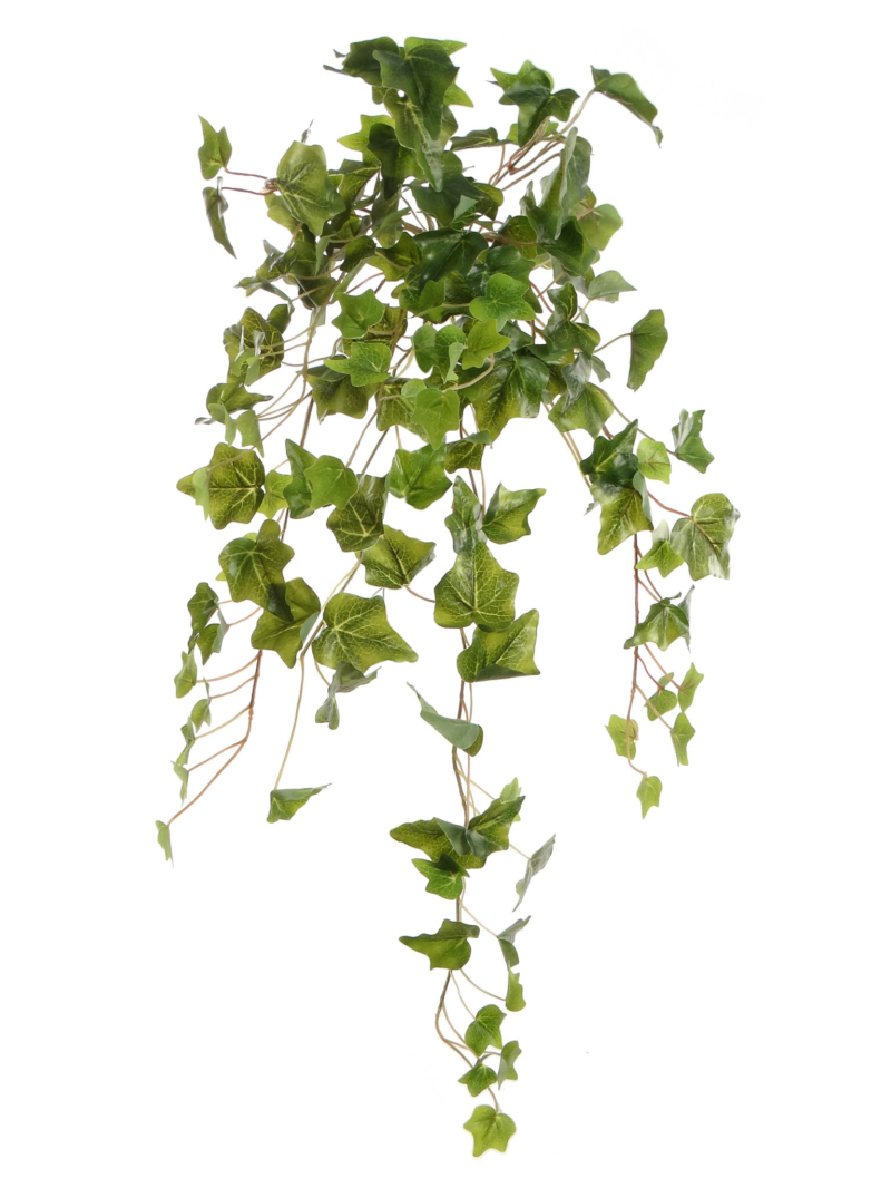 "28""ENGLISH IVY BUSH 140LV X12 140LVS - GR"
