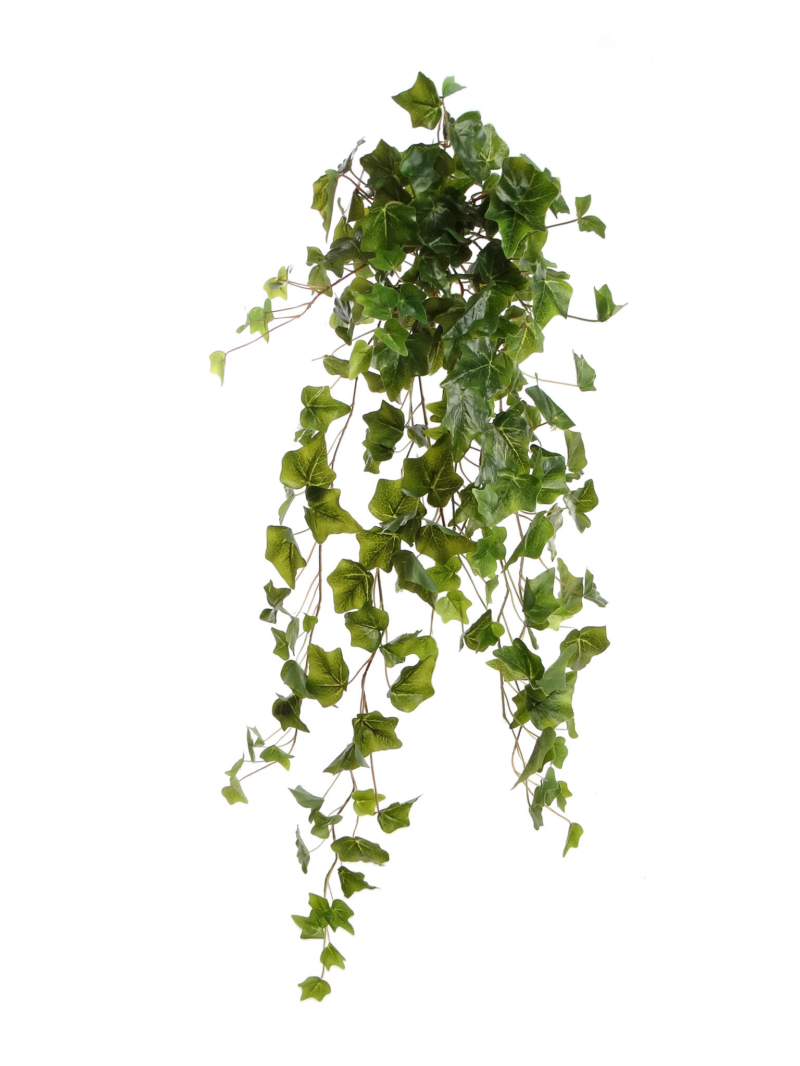 "34""ENGLISH IVY BUSH 209LV X15 209LVS - GREEN"