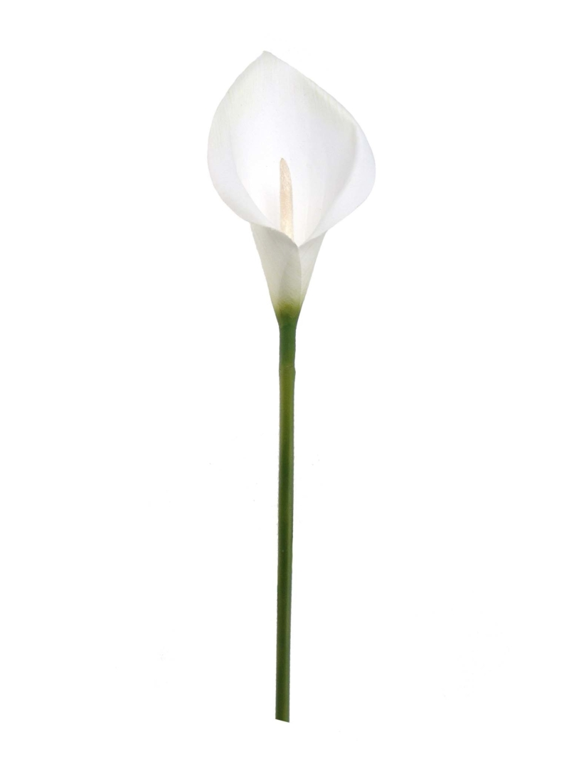 "22"" NATURAL CALLA LILY   - WHITE"