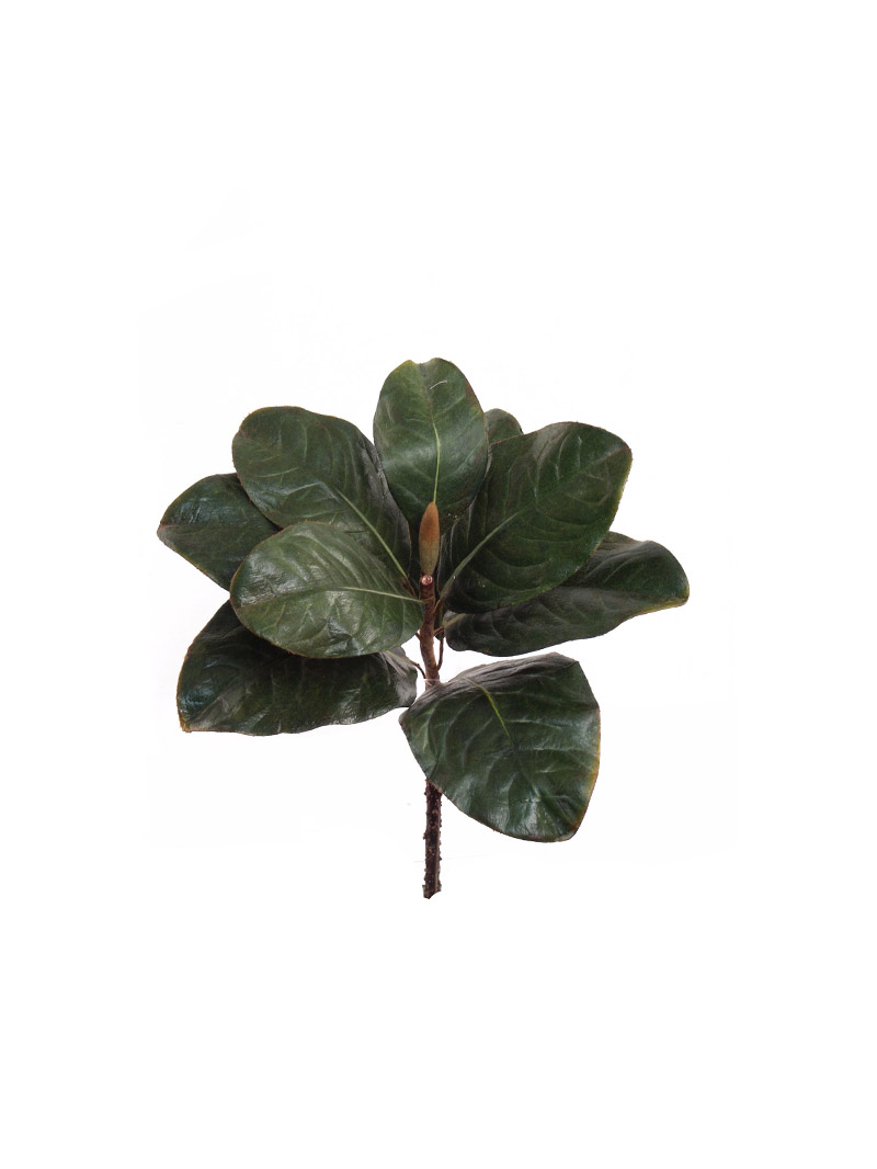 "12"" MAGNOLIA LEAF PICK - GREEN"