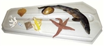 Marine Biology Dissection Kit