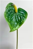 Anthurium Stem Green
