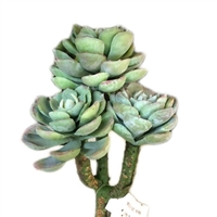 Artificial Three Pick Succulent