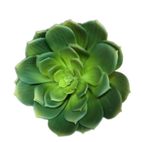Artificial Green Succulent