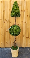 Sphere/Cone Preserved Boxwood Topiary