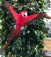Red Flying Parrot
