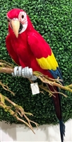 Large Red Parrot