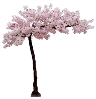 Arched Cherry Blossom Tree