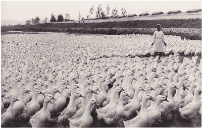 Kwangpo Duck Factory