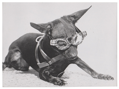 Dog With Eyeglasses