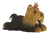 Yorkshire Terrier Dog Miyoni