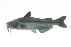 "Cabin Critters Blue Catfish 17"" L"