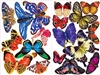 Butterflies 18  Mini Shaped Puzzles II 500 Piece Total by Lafayette Puzzle Company