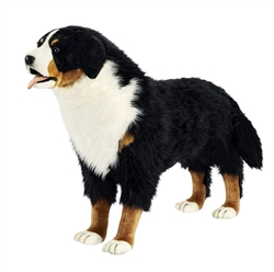 "Bernese Mountain Dog Standing 34.5"" H"