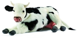 Cow Laying