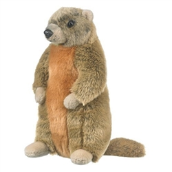 "Yellow Bellied Marmot (Groundhog) 11"" H"