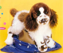 Oglivy Springer Spaniel Dog