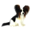 Hansa Papillon Black/White/Brown