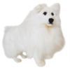 Hansa German Spitz